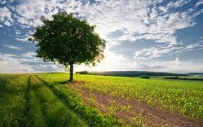 Картинка небо, пейзаж, природа, дерево, nature