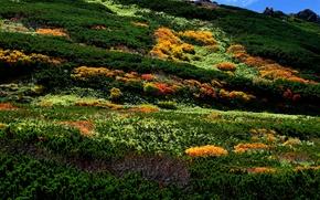 Картинка камни, горы, растительность, ландшафт, кусты, Asahidake, Япония