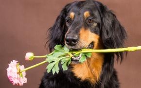 Картинка цветок, фон, друг, собака