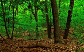 Обои деревья, заросли, ствол, лес, листья