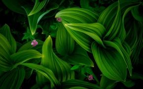 Обои лето, листва, цветы, лес