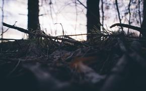 Картинка лес, небо, деревья, природа, земля, сосна, пасадка