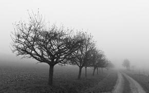 Картинка дорога, деревья, white, black, огород
