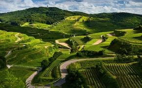 Картинка зелень, холмы, красиво
