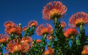 Картинка небо, листья, растение, лепестки, экзотика