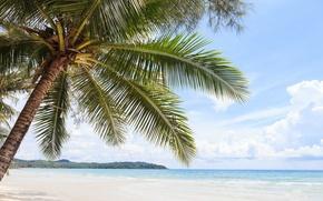 Картинка море, листья, пальма, дерево
