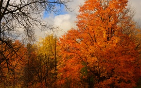 Картинка осень, лес, небо, облака, деревья