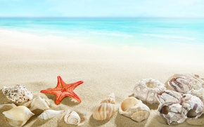 Картинка beach, sea, sand, seashells