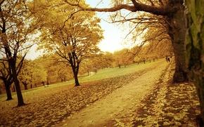 Картинка парк, дорога, деревья, листья, тропинка, желтый, осень, лес