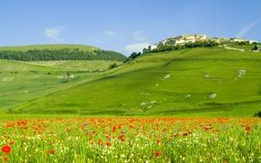 Обои пейзаж, цветы, природа, холмы, поля, маки, дома, italia, леса, италия