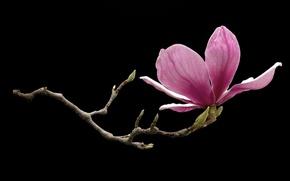 Обои цветок, ветка, лепестки, фон, сад