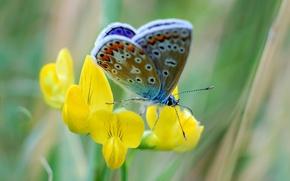 Картинка цветок, природа, бабочка, лепестки, мотылек