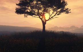 Картинка дерево, солнце, трава