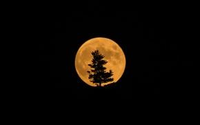 Картинка дерево, луна, спутник, силуэт, затмение, Moon