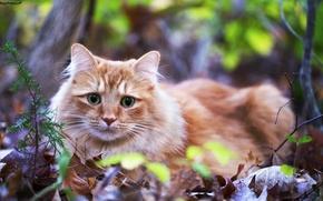 Картинка кошка, лежит, взгляд, рыжая, листья, трава, зеленые, глаза