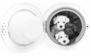 Картинка собаки, щенки, чёрно-белая, трио, монохром, стиральная машина, троица