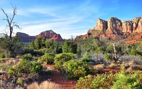 Картинка небо, облака, деревья, горы, природа, скалы, пустыня, кусты, Arizona, Sedona