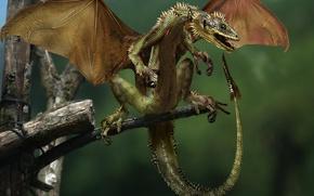 Картинка дерево, дракон, крылья