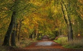 Картинка дорога, осень, лес, деревья, Англия, England, Wiltshire, Уилтшир, Savernake Forest