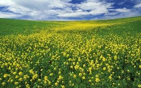 Обои лето, Поле, цветы, облака