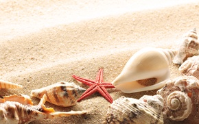 Обои лето, солнце, берег, ракушки, песок