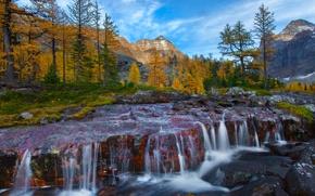 Картинка осень, лес, деревья, горы, река, камни, водопад, Canada, British Columbia, канада, пороги