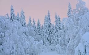 Картинка зима, снег, деревья, елки