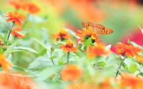Картинка лето, цветы, природа, бабочка