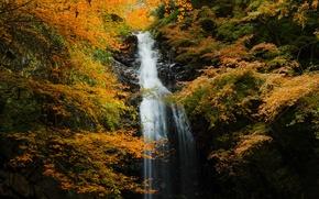 Картинка осень, лес, листья, деревья, ветки, скала, водопад, желтые