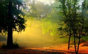 Картинка парк, рассвет, Осень