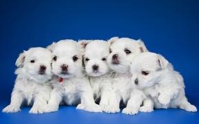 Картинка щенки, малыши, квинтет