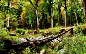 Картинка лес, деревья, природа, красота, мостик, глушь