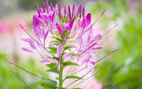 Картинка цветок, растение, лепестки, стебель, соцветие