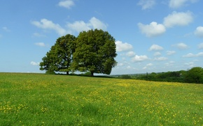 Картинка облака, деревья, цветы, луг