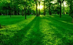 Обои зелень, деревья, поляна