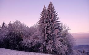 Обои ель, снег, холод, природа, зима, мороз, деревья, дерево, ели, холмы, небо