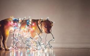 Картинка праздник, собака, гирлянда, лампочки