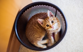 Картинка шерсть, котенок, смотрит, кот