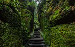 Обои камни, Германия, Национальный парк Саксонская Швейцария, ступени, мох