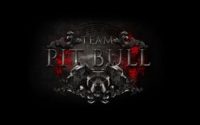 Обои логотип, лого, команда, logo, бойцовский клуб, mma, смешанные единоборства, mixed martial arts, team pit bull, ...