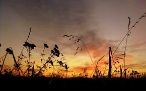 Обои Рассвет, небо, трава
