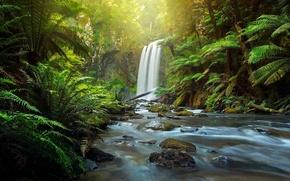 Картинка лес, река, водопад, Австралия, папоротник, Australia, Victoria, The Otways, Aire River, Great Otway National Park, …