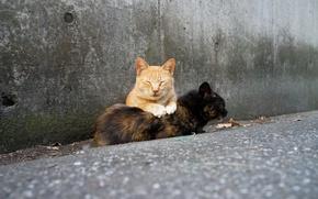 Обои пара, отдых, коты, фон