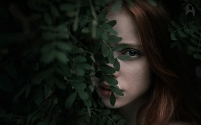 Картинка листья, Катя, боке, Катюша, Георгий Чернядьев, Екатерина Ясногородская