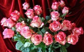 Картинка розовый, розы, букет