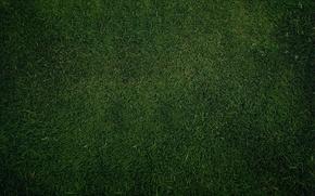 Обои Green, зелень, текстура, трава, обои, газон