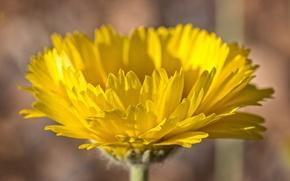 Обои цветок, краски, растение, лепестки