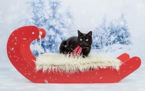 Обои кот, фотосессия, зеленоглазый, черный, шарф, салазки, новый год, лесок, рождество, фон, снег, красный, лежит, кошка, ...
