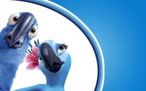 Обои жемчужинка, попугаи, ара, рио-де-жанейро, взгляд, фон, рио, клюв, цветок, мультфильм, пара, птицы, удивление, голубой, голубчик