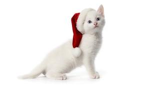 Картинка белый, котенок, шапочка